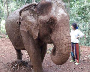 Rijden op een olifant is dierenmishandeling. Daarom sta ik hier naast de olifant en zit ik niet op zijn rug.