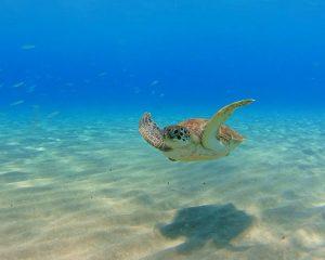 Sarah was aan het snorkelen in Curaçao.